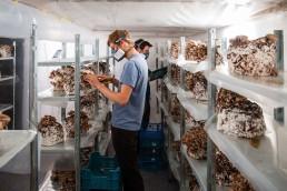 Le Champignon De Bruxelles mushroom farming