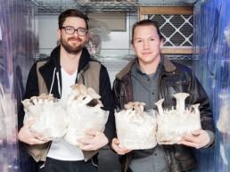 SmallHold mushroom farming New York