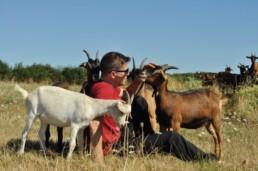 12 steps to farming Zjef Van Acker