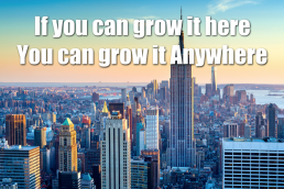 If you can grow it here, you can grow it anywhere urban farming vertical farming New York Agritecture