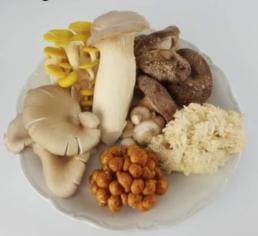 Pad en Stoel mushrooms 12 steps to farming