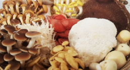 Pad en Stoel paddenstoelen