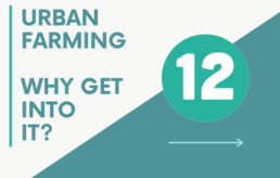 12 steps to urban farming