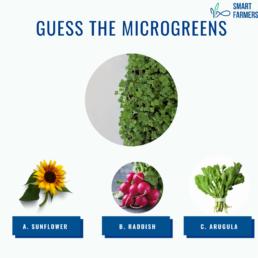 ARUGULA 12 steps to farming smart farmers microgreens
