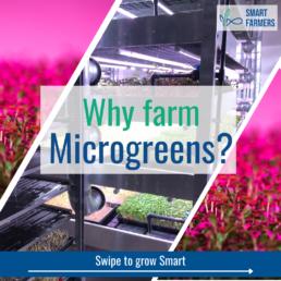 Smart Farmers 12 steps to farming Why farm microgreens